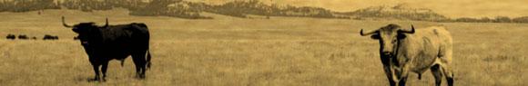 pict-banner-longhorn
